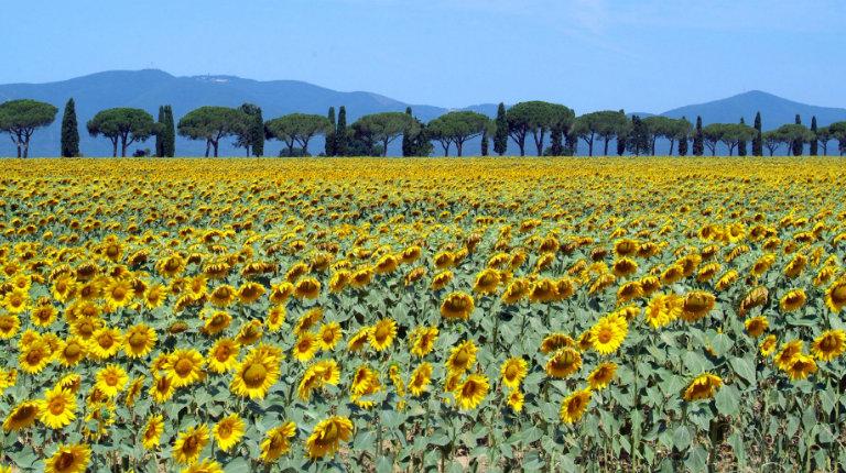 Alla scoperta delle regioni italiane: fare impresa in Toscana